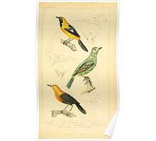 The Animal Kingdom by Georges Cuvier, PA Latreille, and Henry McMurtrie 1834 690 - Aves Avians Birds Poster