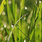 Minnesota Spring by Angela King-Jones