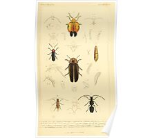 The Animal Kingdom by Georges Cuvier, PA Latreille, and Henry McMurtrie 1834  435 - Insecta Insects Poster