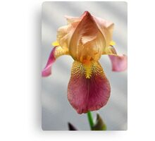 Iris In Dry Brush Canvas Print