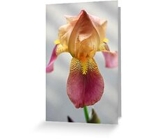 Iris In Dry Brush Greeting Card