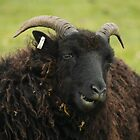 Black Ram by Franco De Luca Calce
