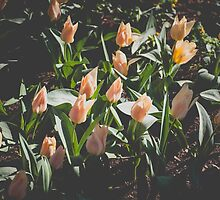 Spring Mood by katerinaimages