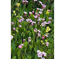 Backyard Wildflowers 3 Photographic Print