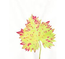 Watercolor Leaf Photographic Print