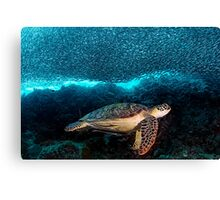 Turtle and Sardines Canvas Print