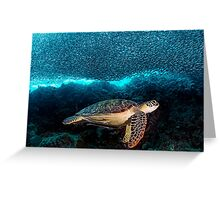 Turtle and Sardines Greeting Card