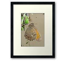 Butterflies and Aphids Framed Print