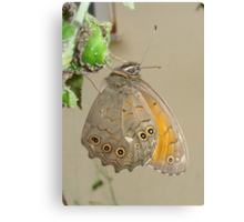 Butterflies and Aphids Canvas Print