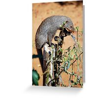 Thirsty Mongoose Greeting Card