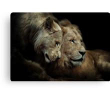 White Lions Canvas Print