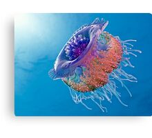 Crown Jellyfish Canvas Print