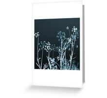 In the Still of the Night Greeting Card