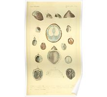 The Animal Kingdom by Georges Cuvier, PA Latreille, and Henry McMurtrie 1834  242 - Mollusca Mollusks Poster