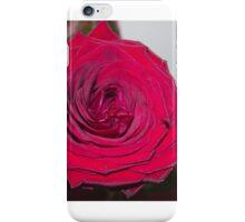 Big red rose iPhone Case/Skin