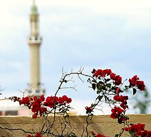 Religious Rose by hady elwy