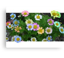 Coloured Daisies Canvas Print