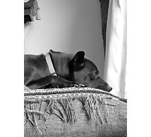 Pondering Pooch Photographic Print