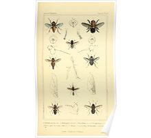 The Animal Kingdom by Georges Cuvier, PA Latreille, and Henry McMurtrie 1834  531 - Insecta Insects Poster
