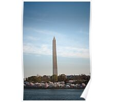 Cherry Blossom- Washington Memorial Poster