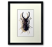 """Odontolabis d. subita"" Stag Beetle Watercolor Framed Print"