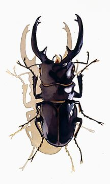 """Odontolabis d. subita"" Stag Beetle Watercolor by Paul Jackson"