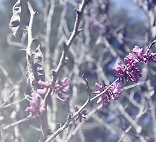 Eastern Red Bud by CraftyCreepers
