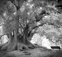Tree with Bench by Donna Rondeau