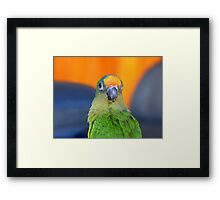 Delta - Peach-Fronted Conure - NZ Framed Print
