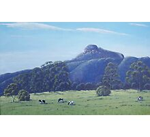 cow paddock Photographic Print