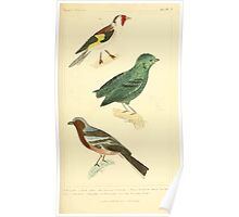 The Animal Kingdom by Georges Cuvier, PA Latreille, and Henry McMurtrie 1834 668 - Aves Avians Birds Poster
