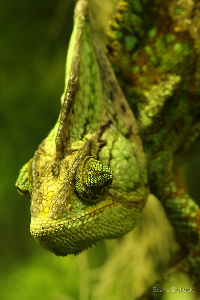 Panther Chameleon by Steve Bullock