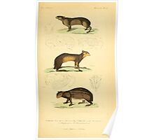 The Animal Kingdom by Georges Cuvier, PA Latreille, and Henry McMurtrie 1834 612 - Mammalia Mammals Poster