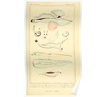 The Animal Kingdom by Georges Cuvier, PA Latreille, and Henry McMurtrie 1834  232 - Mollusca Mollusks Poster