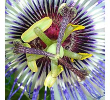 Passion Flower Close Up Photographic Print