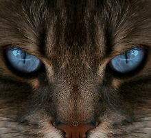 Clear Blue Eyes Cat by terrebo