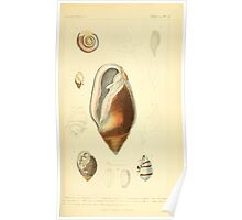 The Animal Kingdom by Georges Cuvier, PA Latreille, and Henry McMurtrie 1834  227 - Mollusca Mollusks Poster