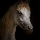 Arabian Filly by Sharon Morris