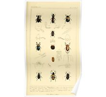 The Animal Kingdom by Georges Cuvier, PA Latreille, and Henry McMurtrie 1834  454 - Insecta Insects Poster