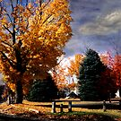 Autumn on the Common by Wayne King