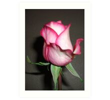 Gifted Rose #2 Art Print