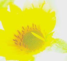 sunflower by Muhammad Tariq Mahmood Ahmad