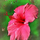 Artistic Hibiscus  by June Holbrook