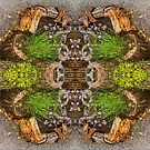 Stump Garden Symmetry by Deborah Dillehay
