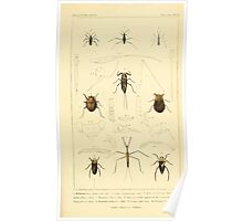 The Animal Kingdom by Georges Cuvier, PA Latreille, and Henry McMurtrie 1834  482 - Insecta Insects Poster