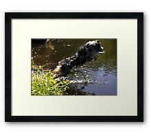Diving Dog Framed Print