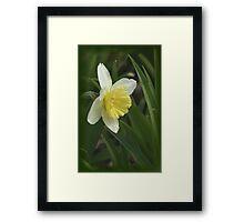 Beautiful Daffodil Framed Print
