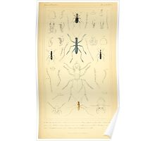 The Animal Kingdom by Georges Cuvier, PA Latreille, and Henry McMurtrie 1834  413 - Insecta Insects Poster