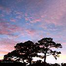 Florida Sky by June Holbrook