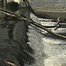 Nice White Water Fall by terrebo